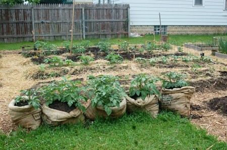 Eight companies have gardens at That Hood Ranch. (Photo by Amelia Jones)