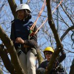 Students learn tree science from professional arborists