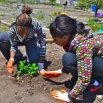 Junior Master Gardeners