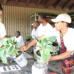 Johnsons Park residents receive free flowers to beautify homes