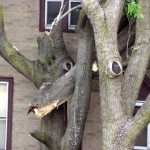 Firefighters stumped by severed tree branch