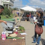 Walnut Way Harvest Day celebration highlights diverse flavors, local food