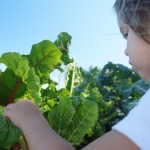 Hunger Task Force farm teaches children about food, community