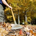 How to dispose of leaves