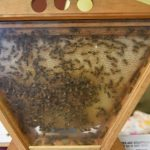 Urban Ecology Center celebrates National Honeybee Day at Washington Park